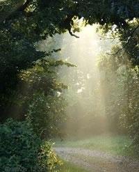 Sentier et rayons de soleil