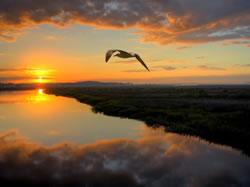 Coucher de soleil et oiseau