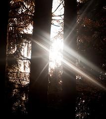 Arbres et lumière