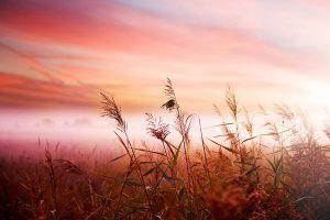 Plantes et horizon