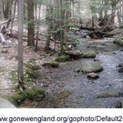 Source dans un bois