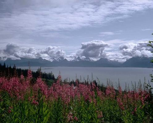 Montagne et fleurs