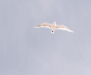 Oiseau qui vole