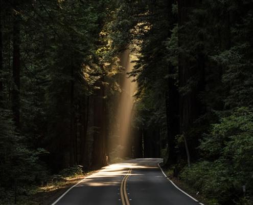 """""""Lumière sur le chemin"""" par John Towner (unsplash.com)"""