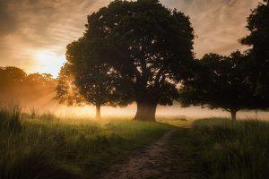 Arbre, enracinement, lumière, soleil par Simon Wilkes (unsplash.com)