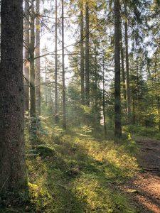 Sentier dans bois par Gaetan Werp (unsplash.com)