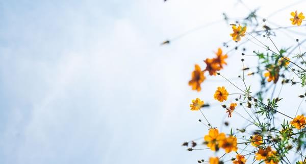 Ciel et fleur de Masaaki Komori (unsplash.com)