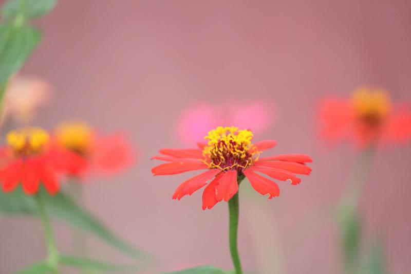 Fleurs, fragilité de Moon Bhuyan (unsplash.com)