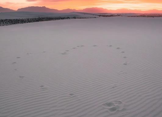 Cœur sur sable avec horizon de Cason Asher (unsplash.com)