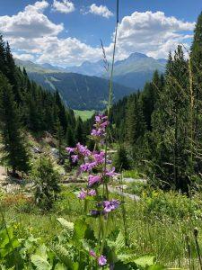 Montagne, forêt et fleurs (unsplash.com)