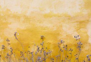 Petites plantes de Mona Eendra (unsplash.com)